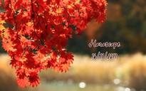 Thứ Năm của bạn (16/11): Nhân Mã cần hâm nóng tình yêu