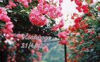 """Thứ Sáu của bạn (21/4): Cự Giải nên nhường nhịn """"người ấy"""""""