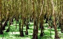 5 rừng tràm nghe là muốn vác ba lô đến ở miền Tây