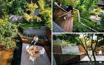 Sau cải tạo, sân vườn kiểu ruộng bậc thang này khiến ai cũng tròn mắt ngưỡng mộ