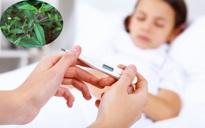 Những bài thuốc giúp hạ sốt, chữa xuất huyết hiệu quả cho người bị bệnh sốt xuất huyết