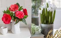 Trang trí nhà đẹp cùng với 2 cách làm hoa giấy đơn giản