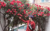 Mê đắm trước cổng nhà rực rỡ hoa hồng ở ngôi nhà thuê của chàng trai 9x