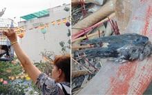 Rằm tháng Giêng- đừng để những chú chim phóng sinh chết luôn tại chùa