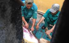 Xuất hiện clip được cho là nhân viên và bảo vệ vườn thú Đà Nẵng mổ thịt nai nuôi