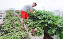4 khu vườn trên sân thượng khiến chị em không ngần ngại tặng ngàn like trong năm 2016