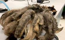 Bị bỏ mặc suốt nhiều năm, chú mèo có bộ lông giống hệt giẻ lau nhà