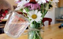 Hoa sẽ tươi rói cả 10 ngày Tết nếu bạn bỏ thứ này vào bình