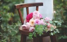 Say đắm trước vẻ đẹp tràn đầy sắc xuân của vườn hồng rộng đến 350m² ở xứ Huế mộng mơ