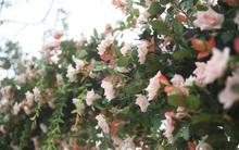Sở Văn hóa và Thể thao Hà Nội yêu cầu tháo hoa giả, thay thế bằng hoa thật
