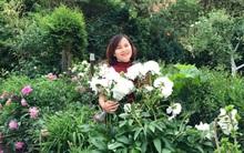 Khu vườn hoa mẫu đơn rộng 1000m² đẹp như trong cổ tích của mẹ Việt ở Đức