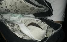 Hà Nội: Phát hiện bé sơ sinh thiếu tháng bị bỏ rơi trên đường Giải Phóng