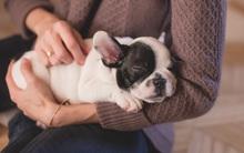 Vì 7 lý do này, phụ nữ hiện đại dù bận rộn đến đâu vẫn cần nuôi thú cưng