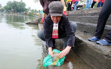 Người Hà Nội thả cá chép để tiễn Táo Quân về trời