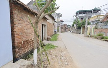 Vụ chặt cây làm đẹp vỉa hè ở Hà Nội: Hàng chục cây xanh được trồng lại ngay tại vị trí cũ