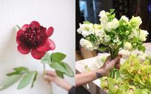 Ngất ngây ngắm những bông hoa nhập khẩu kiêu kỳ, cả triệu đồng/bông mà nàng nào cũng muốn sở hữu một lần