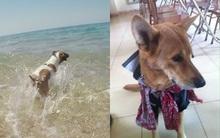 Bức ảnh còn lại của chú chó lao ra biển cứu chủ rồi biến mất khiến dân mạng rơi nước mắt