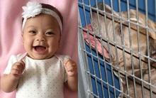 Bé gái 6 tháng tuổi bị chó Pit bull nuôi 9 năm cắn chết khi đang chơi trong xe tập đi