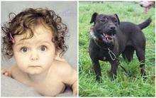 Những vụ chó nhà cắn chết trẻ em khiến cha mẹ hối hận không kịp