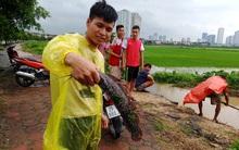 Sau mưa bão, người Hà Nội cất vó đánh cá cạnh các Khu đô thị mới