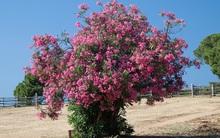 Đừng dại động vào những loài cây này vì chúng đẹp nhưng độc không tưởng