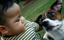 Cảnh báo: Bé trai tử vong nghi do mắc bệnh dại vì chơi với chó mèo trong nhà