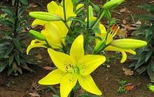 Tết tuyệt đối đừng cắm hoa này trên bàn thờ, cực kì kiêng kị