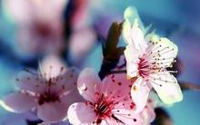 Thứ Hai của bạn (4/12): Xử Nữ chú ý sức khỏe