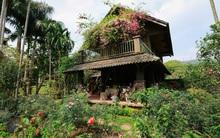 Nhà vườn xanh mát bóng cây, hoa nở đẹp đến