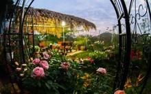Lạc lối giữa vườn hồng rộng đến 5000m² của cô gái 9x ở Hà Nội