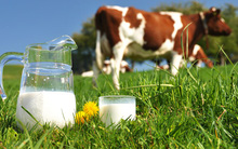 Không chỉ cho con uống sữa, đã đến lúc các mẹ cần tìm hiểu về sữa organic
