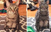 Những con mèo