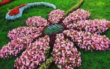20 cách tạo luống hoa đẹp như chốn mê cung cho khu vườn mùa hè