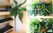 Những cách đơn giản để tạo nên khu vườn đẹp tuyệt từ gỗ pallet