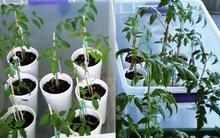 10 cách tự làm khay trồng hạt giống siêu tiện lợi và tiết kiệm dành cho những ai yêu làm vườn