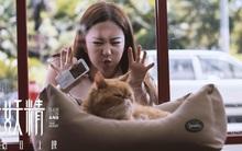Lưu Diệc Phi gây thích thú khi làm vẻ mặt đáng yêu bên chú mèo đỏng đảnh