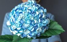 Làm hoa cẩm tú cầu đẹp lung linh trang trí nhà thêm xinh