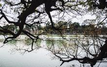 Đi qua cả nghìn lần, bạn đã biết câu chuyện về cây lộc vừng cổ thụ 9 gốc ven bờ Hồ chưa?
