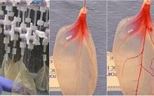 Kinh ngạc: Các nhà khoa học có thể biến lá rau chân vịt thành mô tim người