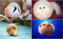 Những con vật tròn lăn lông lốc khiến ai cũng yêu từ cái nhìn đầu tiên