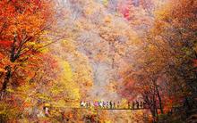 5 điểm đến mùa thu sẽ khiến bạn ngất ngây vì phong cảnh đẹp như trong mơ