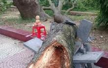 Hải Dương: Bị cành cây xà cừ rơi vào người, nữ phó hiệu trưởng tử vong trong sân trường