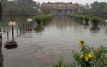 Clip: Cả đàn cá chép bơi tung tăng giữa Đại nội Huế trong ngày mưa lũ