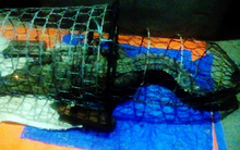 Vụ bắt được cá sấu nặng gần 40kg tại Hà Nội: Sợ người dân kéo đến nhiều nên đã bán với giá 3 triệu đồng