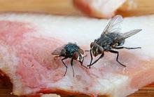 """Thấy ruồi đậu lên thức ăn cũng đừng """"điên tiết"""" xách cây đập mà bạn phải lập tức…"""