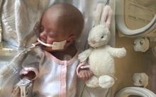 Mua thỏ bông để bỏ vào quan tài con sắp mất, đến vài tuần sau, bố mẹ không tin vào mắt mình