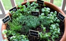 Infographic này sẽ thay đổi thói quen trồng thảo mộc tự phát của bạn