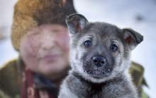 Trời lạnh - 15 độ C, chú chó liếm băng trên nắp cống rồi cũng bị kẹt cứng không thoát ra được