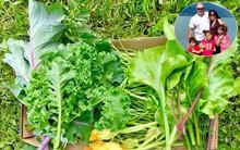 Khu vườn rộng gần 40 nghìn m² xanh tươi rau quả Việt của mẹ 3 con ở Canada