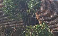 Clip: Tính toán sai, người đàn ông cưa cây gây sập nhà ở Sơn La